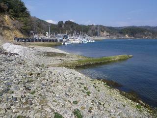 20120328_071牡鹿半島荻浜
