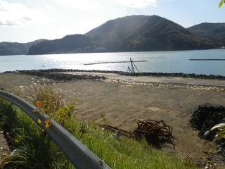 20111116_007女川石浜