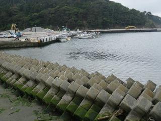 20130612_022牡鹿半島給分浜