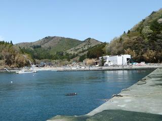 20110504_023女川指ケ浜