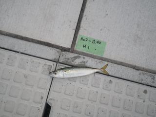 201509016_004女川石浜