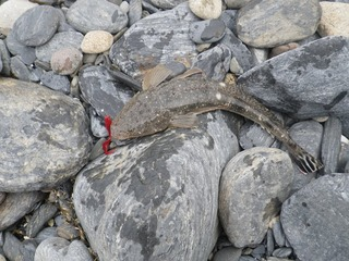 20130612_037牡鹿半島蛤浜