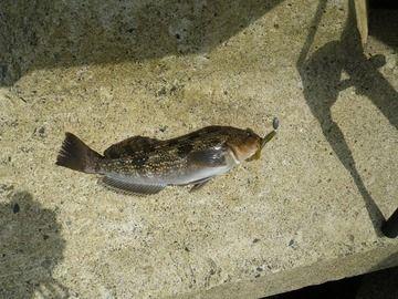 20120711_001滝浜