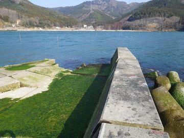 20120328_082牡鹿半島桃浦
