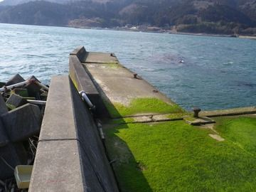 20120328_080牡鹿半島桃浦