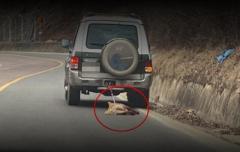 「車に犬をつなぎ走行」 60代男を警察に告発  韓国・尚州