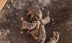 中国の動物園でオオカミの檻に愛犬を落とした客 犬はオオカミに噛み殺される