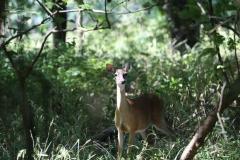 「鹿と間違えた」登山男性に散弾銃誤射 指撃たれる 山梨