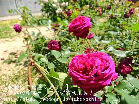 18-05-09-12-18-07-211_deco