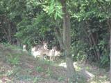 峰山公園の野犬