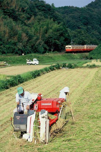 小湊鉄道・稲刈り