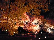 河口湖紅葉まつり