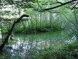 上高地の湿地帯