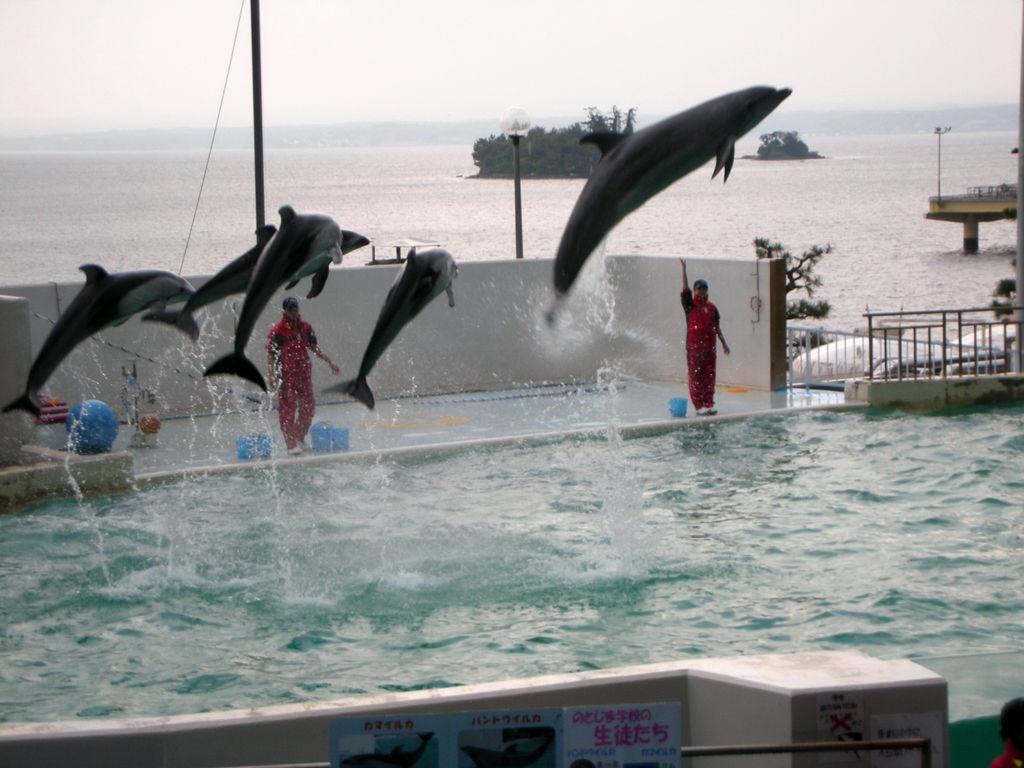 のとじま水族館 : 旅は哲学ソクラテス