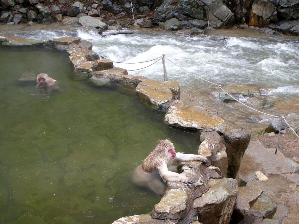 渋の地獄谷噴泉と地獄谷野猿 ...