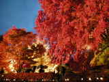 富士河口湖紅葉まつり(もみじ回廊)