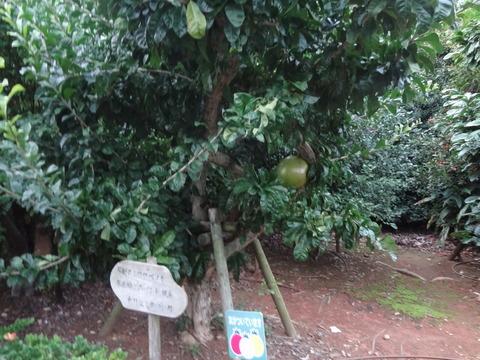 熱帯フルーツ園