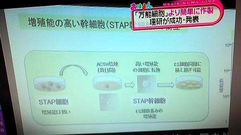 stap_stem