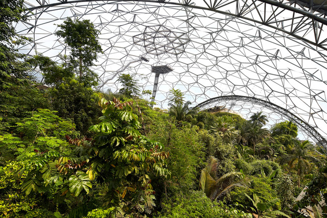 rainforest-biome-eden-project-2015-©Hufton+Crow-004