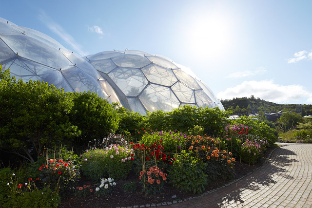 dahlias-biome-eden-project-2015-©Hufton+Crow-048