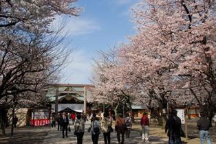 「靖国神社 桜」(浦田先生)
