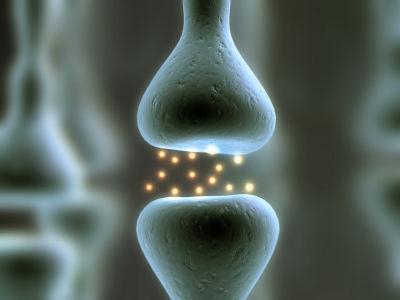 神経伝達XSmall
