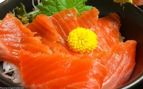 shinsyu-salmon1