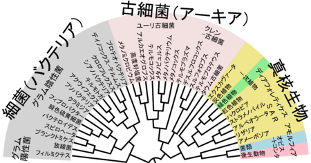 Phylogenetic_Tree_of_Life-ja