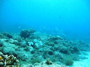 屋久島の海中