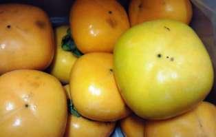 柿の季節♪
