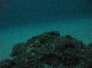 屋久島の海中:日食