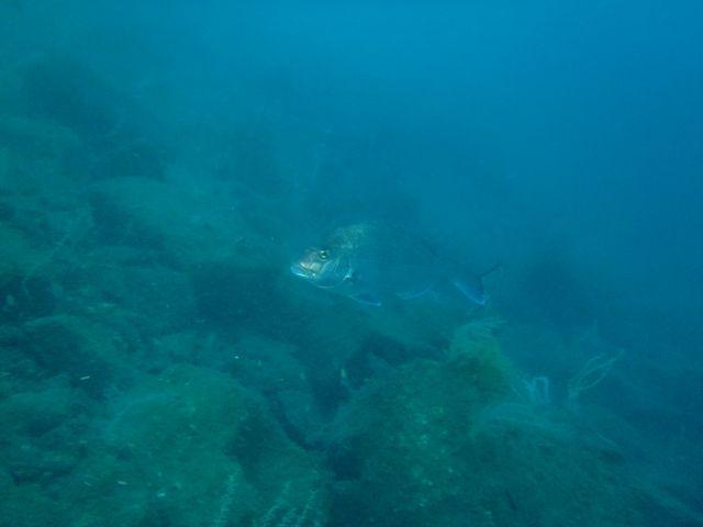 獅子浜 (9)