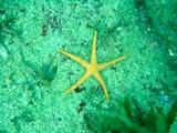 初めてみた水中生物