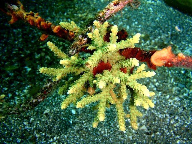 こんなところで珊瑚