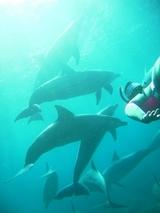 イルカが沢山いました〜