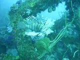 沖根漁礁!ここもすごいぞ!