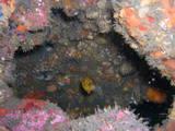 ミナミハコフグ幼魚です♪