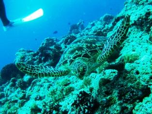 海カメ〜♪