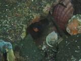 貝がたくさん♪