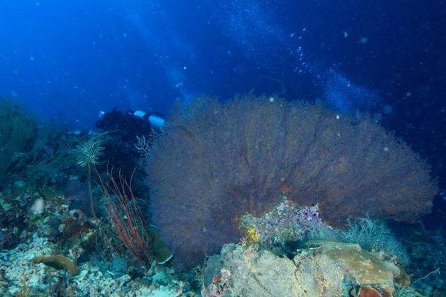 ナルスアン島 (2)