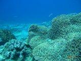 サンゴが見事