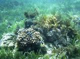 GWセブ島