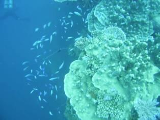 サンゴ多し!