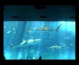 水族館の巨大水槽
