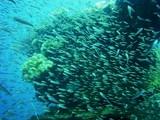 沈船は漁礁になって多くの魚達が棲んでいます。