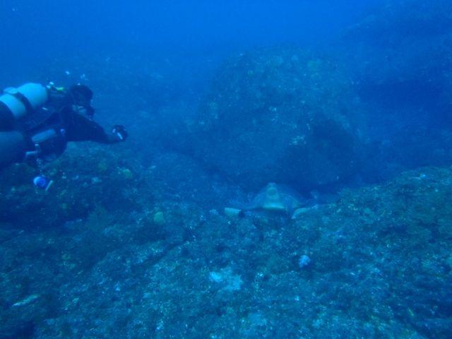 利島2 (9)
