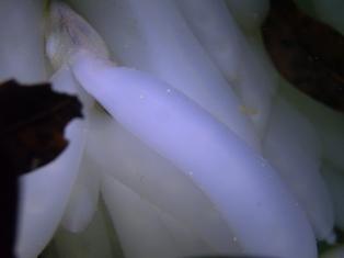 PIC_0548