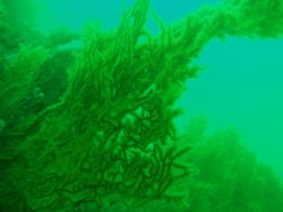 水深18m付近