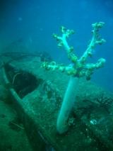 沈船は、海洋生物達の棲家です。