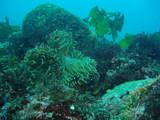 イソギンチャク岩